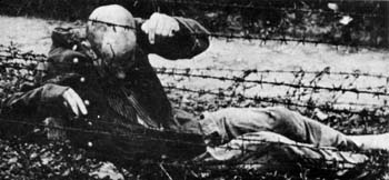 Many desperate prisoners deliberately made for the fences of concentration camps, knowing they would either be shot or electrocuted.